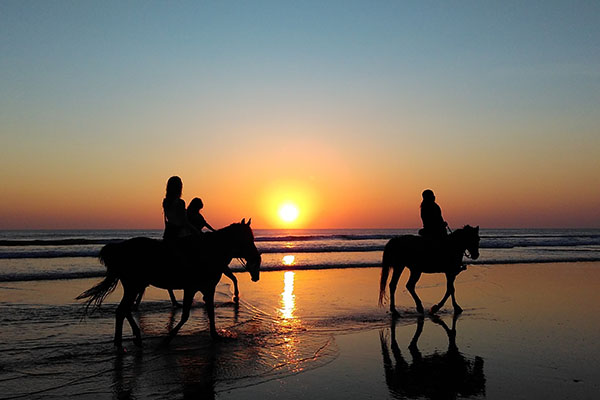 bp surf hotel playa grande costa rica horse horseback riding