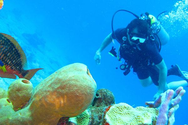 bp surf hotel playa grande costa rica scuba diving catalina islands